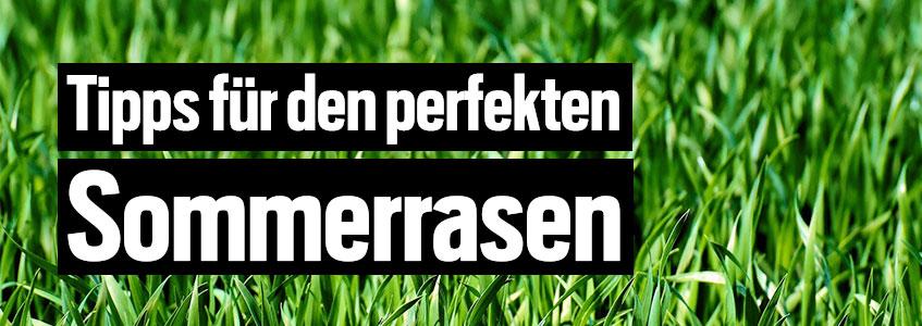 Tipps für die richtige Rasenpflege im Sommer