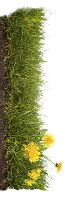 Rasenmäher Untergrund 1